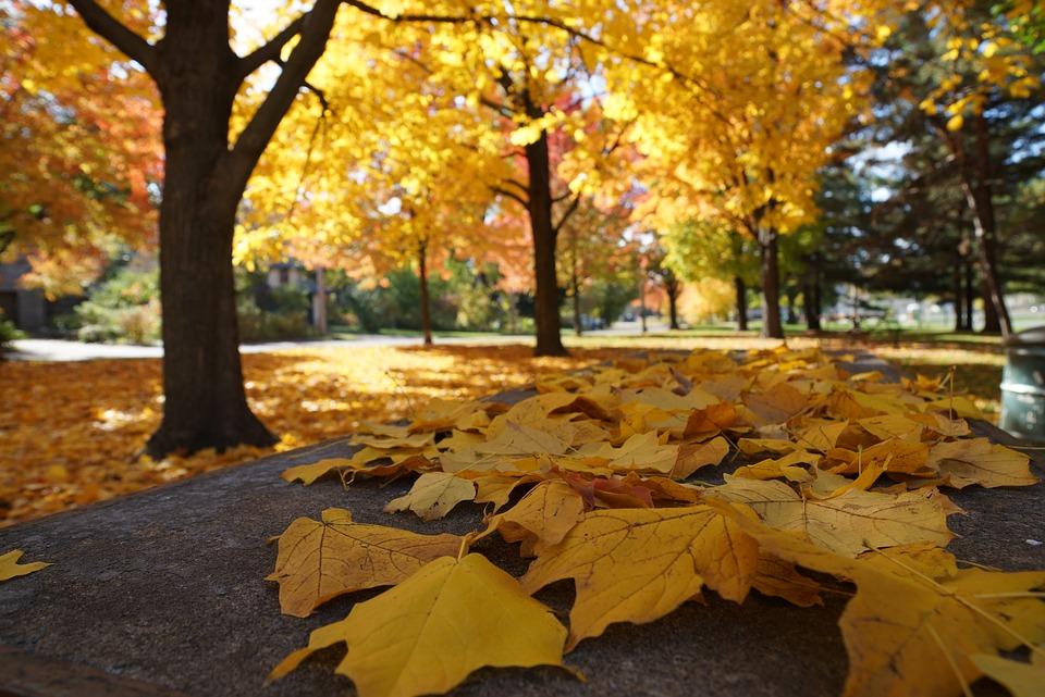autumn-2898551_960_720
