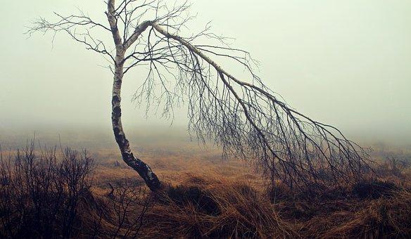fog-1717410__340