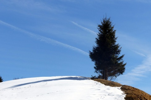 01 spruce-670299_960_720
