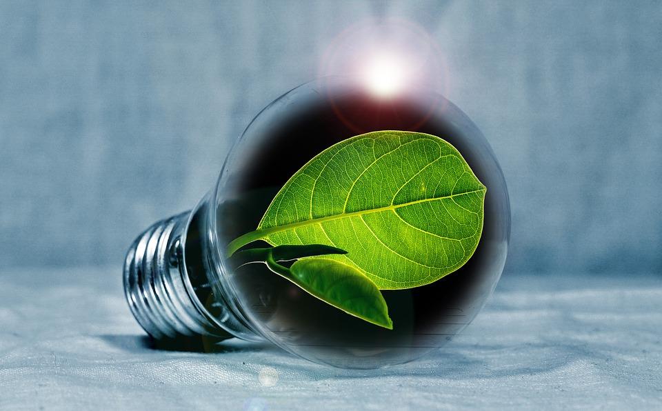 light-bulb-2631864_960_720.jpg