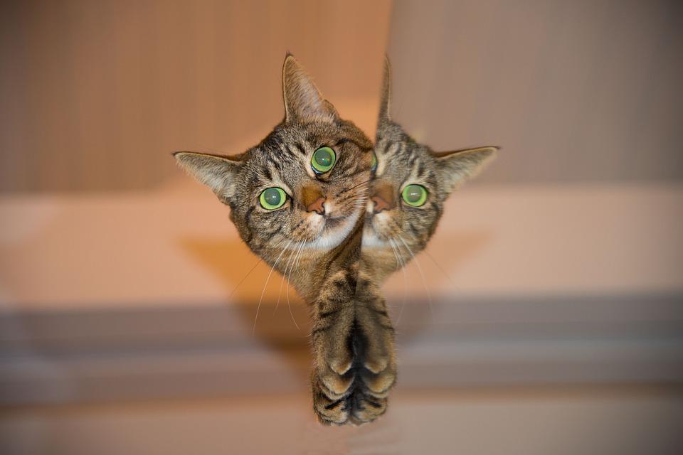 cat-697113_960_720