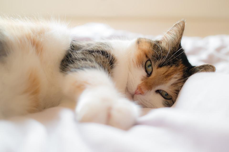 cat-1058095_960_720