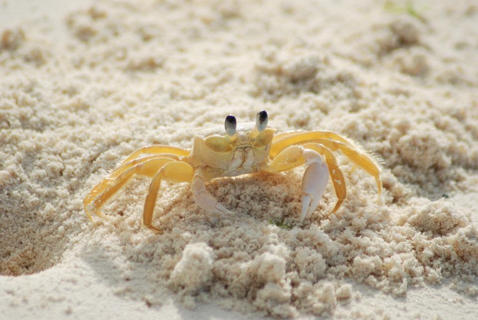 crab-215170_960_720