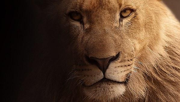 Le Lion en quelqueslignes…